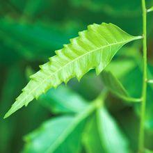 20 Plante care resping în mod natural puricii și alte insecte