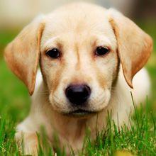 7 modalități de a scăpa în mod natural de fleasuri pe câini