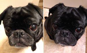 Ulei de cocos pentru câini` width=