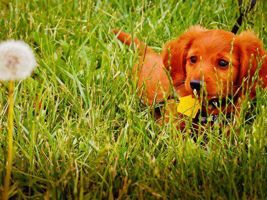 Cele mai bune moduri de reciclare și compostare a deșeurilor de câine gratis