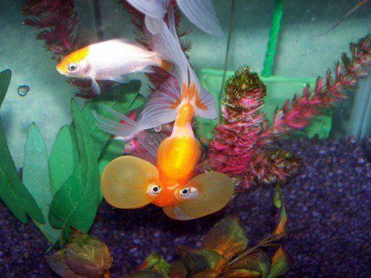 Nemo nu` title=