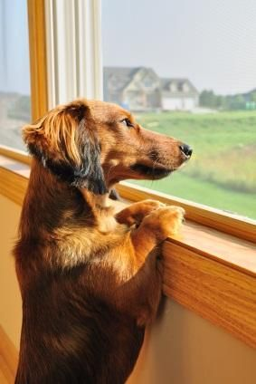 Câine nervos