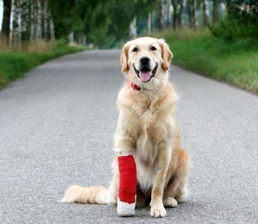 Grijă pentru câinii răniți