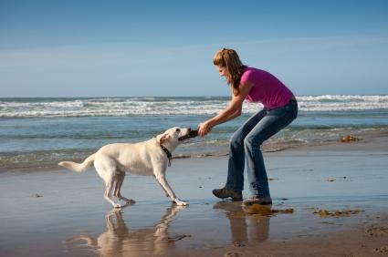 Alegerea unui canin pentru a se potrivi cu stilul tău de viață