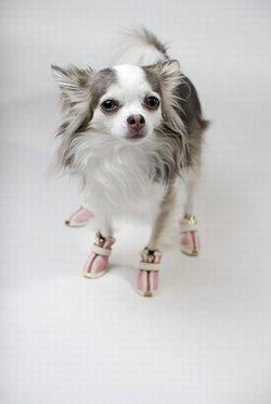 Alegerea cizme pentru câinele tău