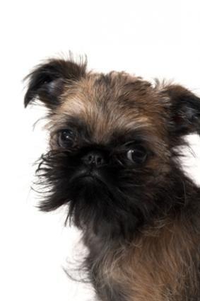 Nume de câini inteligente