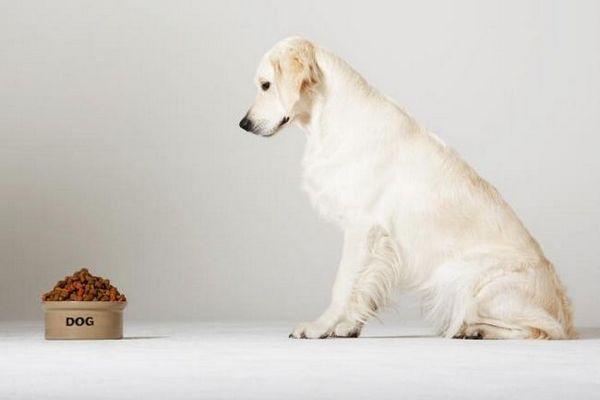 Alimente pentru câini diabetici