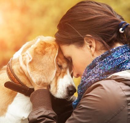 Câinele tău te iubesc cu adevărat?