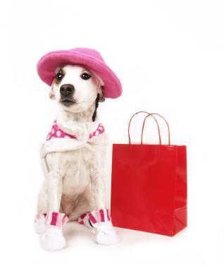 Haine de câine de lux