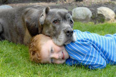 Îngrijirea câinilor în vremuri economice dificile