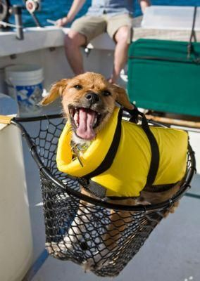 Câini de salvare pentru câini