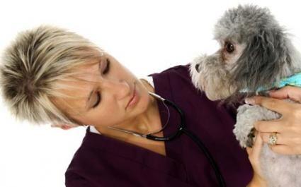 Problemele tractului urinar pentru câini