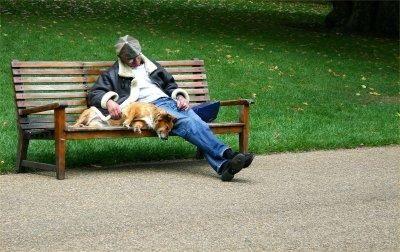 Câinele de mers pe jos parcuri