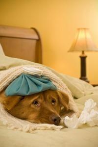 Câine cu probleme intestinale