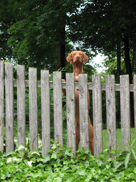 Idei de gard pentru proprietarii câinilor