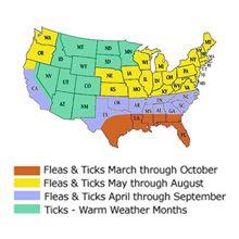 Flea și sezonul de tick este aici - fi pregătit!