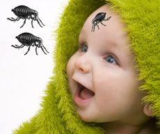 Inflamarea fulgilor pe bebeluși - sunt puricii care vă mușcă copilul?