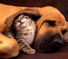 Fiti muscati pe caini si pisici - Cum sa-ti dai seama daca pet-ul tau are fleasuri