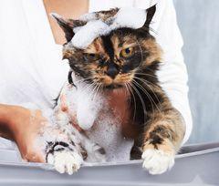 Prevenirea inflamației - mențineți puricii departe de animalele de companie