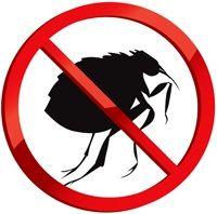Tratamentul de fleas pentru câini
