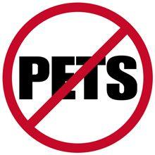 Fleas fără animale de companie - De ce am fleasuri când nu am nici un animal de casă?