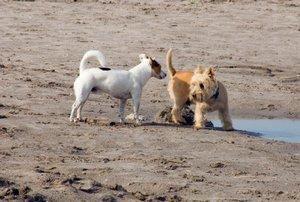Infecțiile glandei analiare canine