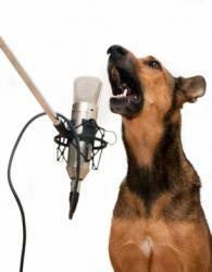 câine lătrat în microfon