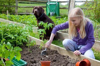 Grădinărit cu câinele în minte