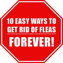 Scapa de purici - 10 modalități ușoare de a scăpa de purici pentru totdeauna