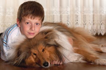 Băiat cu Sheepland-ul Shetland