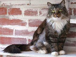 pisica pe trepte