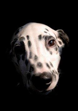 Remediu homeopatic pentru insomnie și incontinență la câini