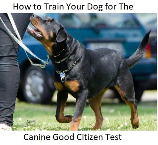 Cum să-ți antrenezi câinele pentru testul bun al cetățeanului