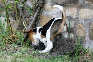 De ce câini îngropă oasele?