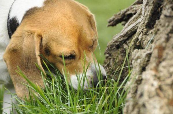 Lista plantelor otrăvitoare pentru câini