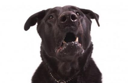 Cancer la om la câini
