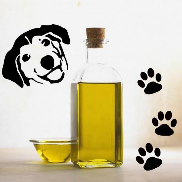 Uleiul de masline pentru caini - Utilizari si beneficii