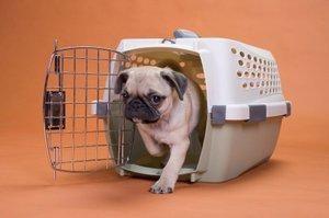 Pregătirea câinilor pentru călătorii în cutii