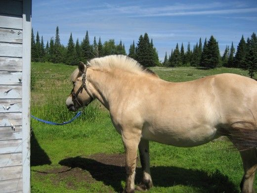 Pregătiți-vă proprietatea pentru a păstra un cal acasă