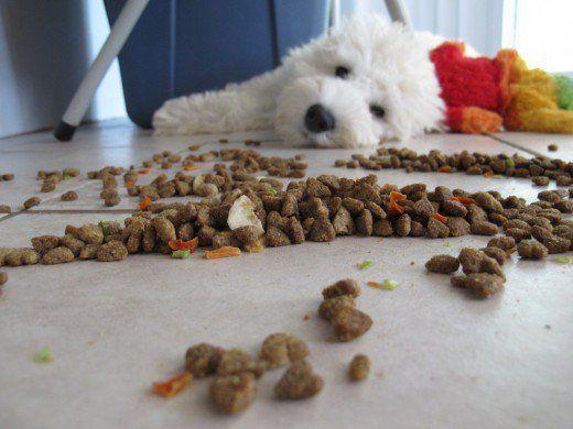 Selectarea hranei pentru câini de calitate