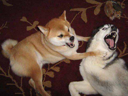 Opriți agresiunea câinelui spre alți câini