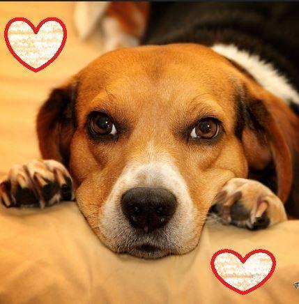 Câini arată dragostea