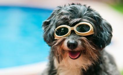 Zece motive pentru a-ți cumpăra câinele o piscină de vânătoare