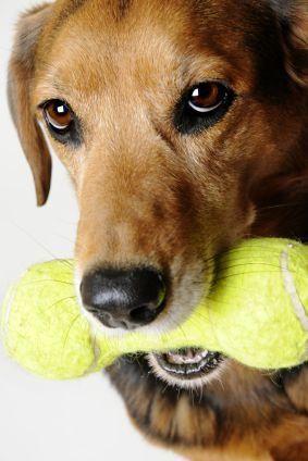 Sfaturi pentru alegerea jucăriilor de câine în condiții de siguranță
