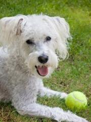 Câine jucăuș