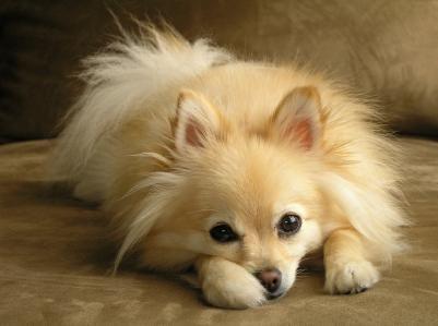 Stomac supărat la câini