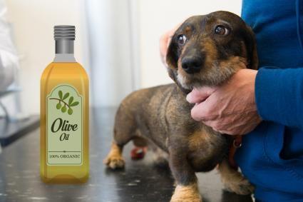 Uleiul de măsline și câinele