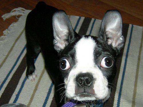 Ce trebuie să faceți când câinele nu va mânca: un sfat simplu