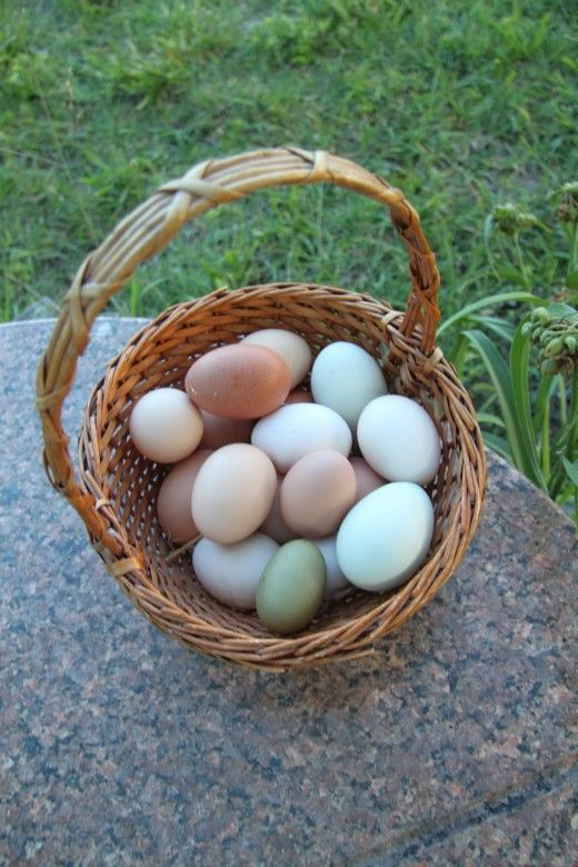 Ce trebuie să faceți atunci când găina dvs. este o persoană care mănâncă ouă